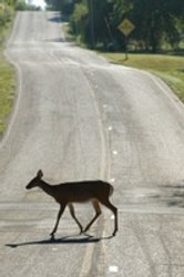 10 Tips to Avoid a Deer Collision