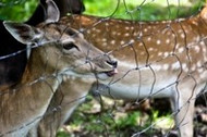 6 Ways to Keep Deer Out of Your Yard