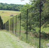 Deer Fences vs. Animal Fences