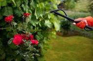 15 New Year's Gardening Resolutions