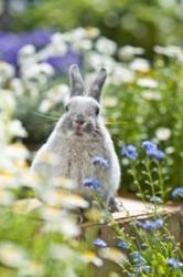 8 Rabbit-Resistant Flowers & Herbs