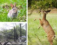 Wildlife Control Solutions