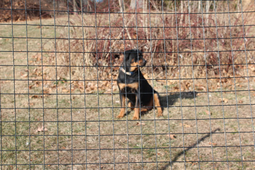 """5' High 14 Gauge PVC Coated Welded Wire Dog Fence Kit-2"""" x 2"""" Mesh"""