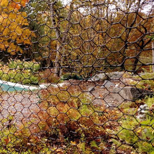Steel Hex Fall Foliage