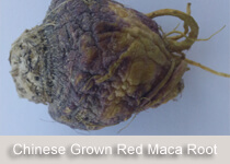 chinese-red-maca-root-2.jpg
