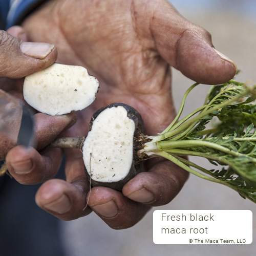 black maca root cut open