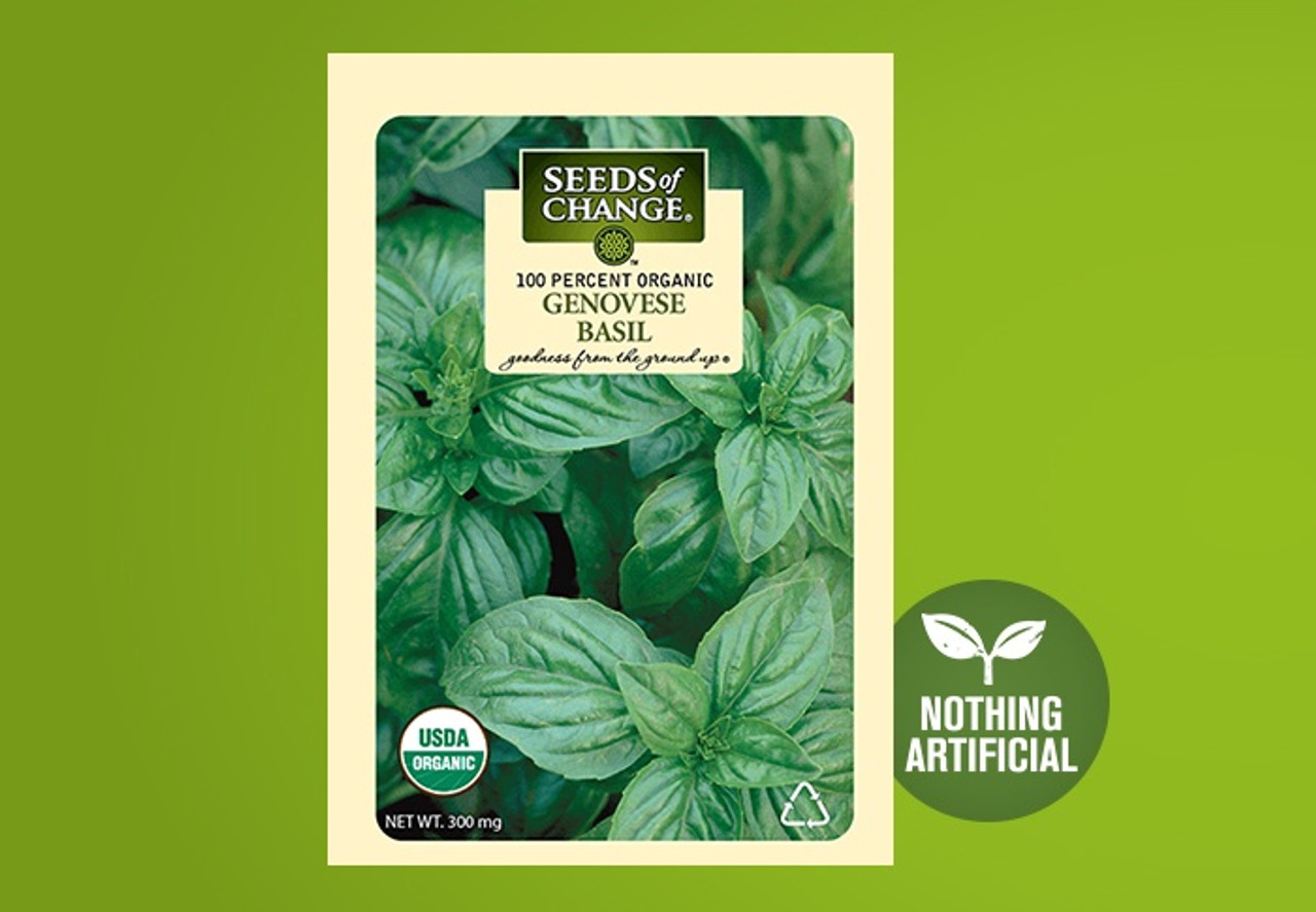 This uniform, slow to bolt, classic basil variety has a concentrated flavor and fine, sweet fragrance that is fantastic for seasonings, salads, garnishes and pesto.