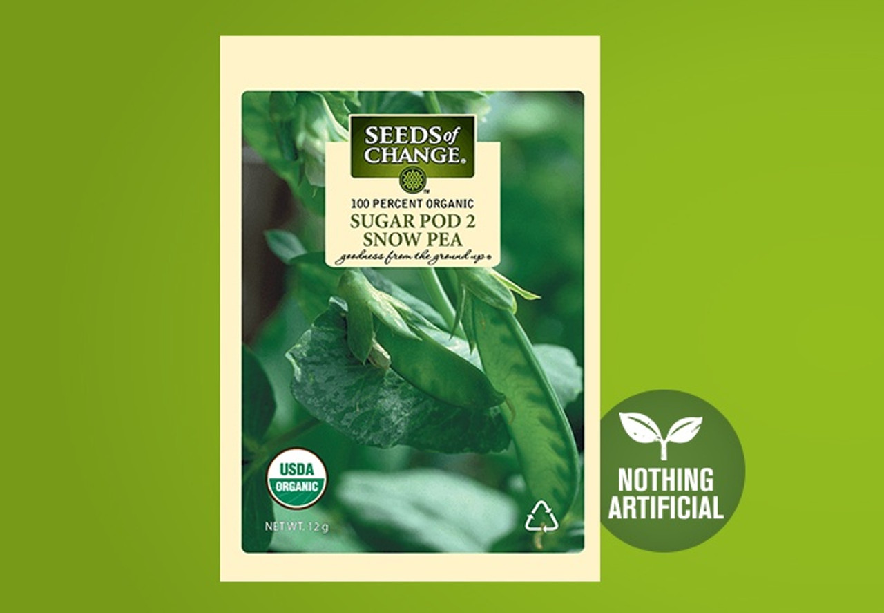 This prolific plant produces thick, succulent and juicy edible-pod snow peas. A reliable bush pea, it does not need trellising and thrives in cool weather.