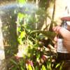 Lightworker + Essence Blend 100ml Spray