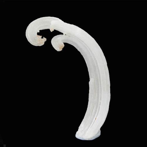 Ram's Horn Selenite 1