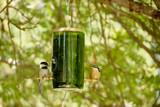Bird Bottle Feeder