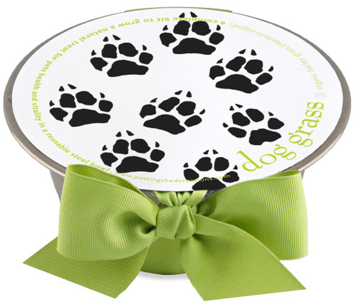 Pet Bowl Dog Grass