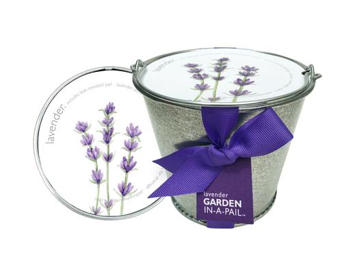 Garden-in-a-pail Lavender