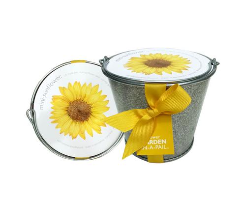 Garden-in-a-Pail Sunflower