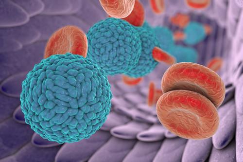Dengue Virus Serotype 4 Envelope Protein (Insect Cells)