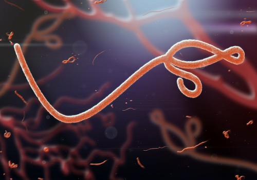 Ebola Virus Nucleoprotein (NP) (Sudan)