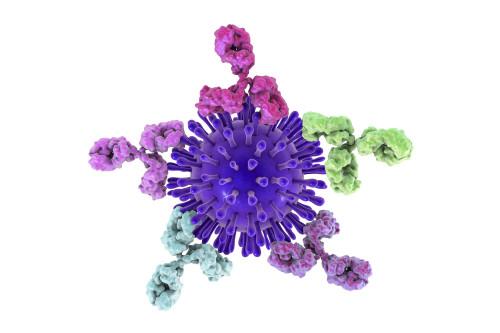 Mouse Anti-Coxsackievirus B3 Antibody (PV25)
