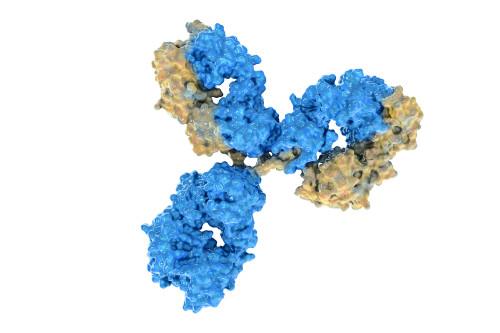 Mouse Anti-Dengue Virus Pan-Serotype NS1 Antibody (EA1)