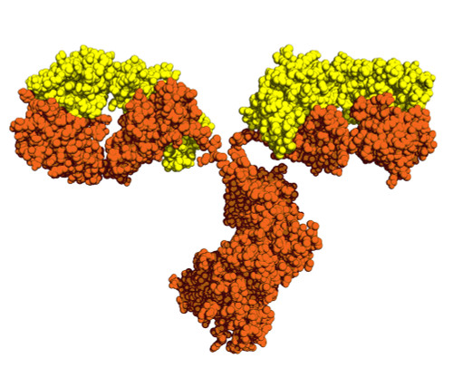 Mouse Anti-Dengue Virus Pan-Serotype NS1 Antibody (EA11)