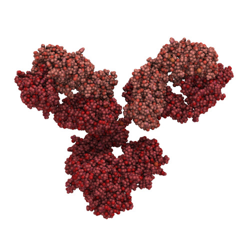 Mouse Anti-Dengue Virus Serotype 1 Envelope Protein (FD6)