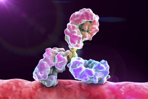 Mouse Anti-Enterovirus 70 Antibody (3651)