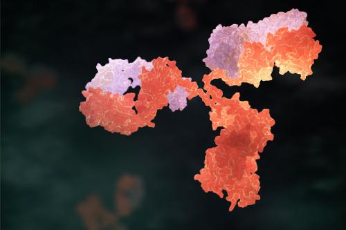 Mouse Anti-Mycoplasma pneumoniae P1 (6533)