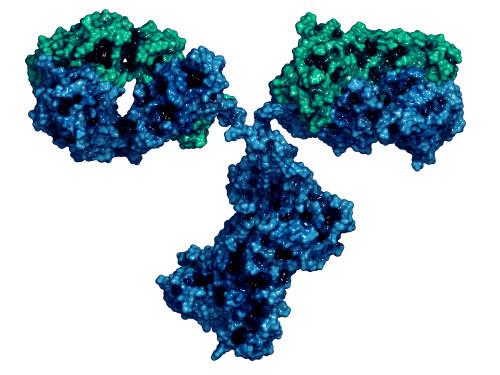 Mouse Anti-Plasmodium Species LDH Antibody (M301)