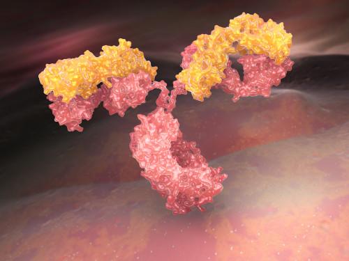 Mouse Anti-Salmonella Paratyphi Antibody (SPA27)
