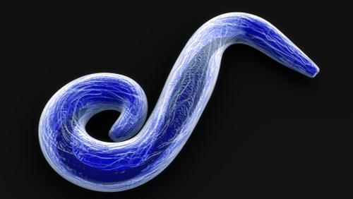 Pan Plasmodium Aldolase Protein
