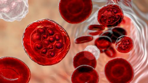 Plasmodium Vivax LDH Protein