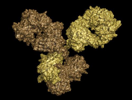 Sheep Anti-Ebola Virus