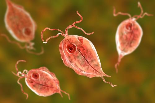 Trichomonas Vaginalis Antigen