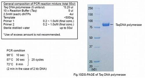Taq DNA polymerase (-dNTPs) with Standard buffer