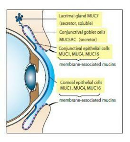 Tear Mucin Assay Kit (O-Glycan Assay Method)