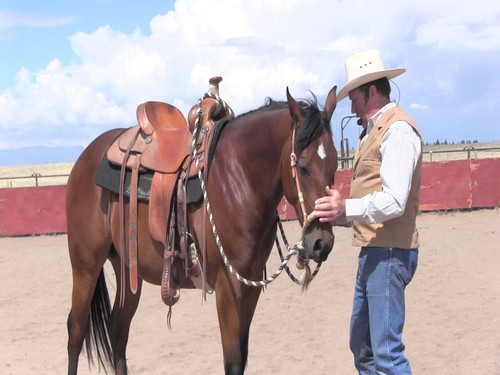 Starting a horse is one of the most important times in a horses training and will set the tone for the rest of their lives. In this 30 minute video Steve will take you step by step on how to use the 3/4 inch Hackamore to develop that all important communication.  Using gentle ground training along with techniques on how to use the Hackamore make those first days easy on horse and rider. You can purchase on DVD or you can download it dirrectly onto your computer by clicking on the link below: https://2258344.flickrocket.com/us/All-Products/c/1/The-First-Days-of-Riding-with-a-Hackamore/p/128565