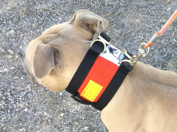 Hog Dog Cut Collar with Tracker and Trainer Features