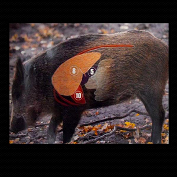 Wild Boar Target Showing Vital Kill Areas