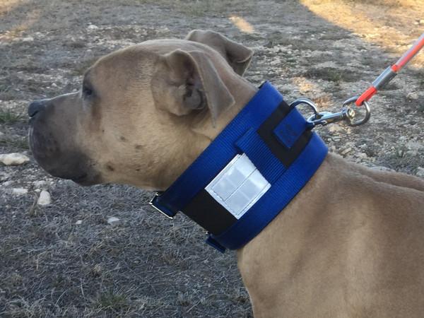 Basic Hog Dog Cut Collar