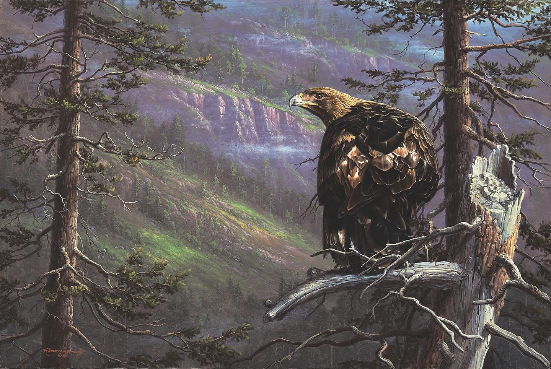 Eagle Fine Art Prints