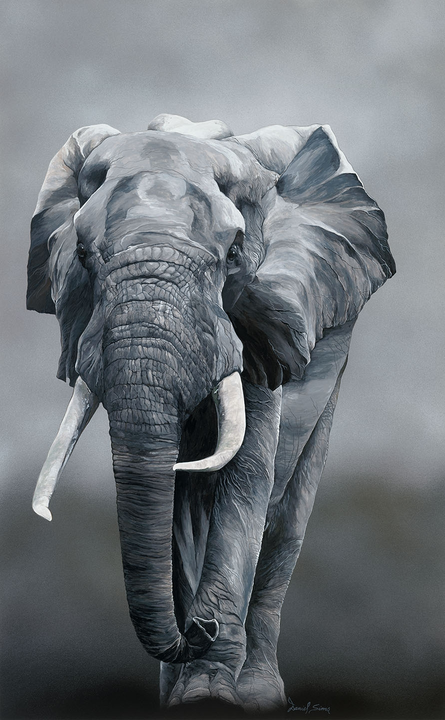 Elephant Fine Art Prints