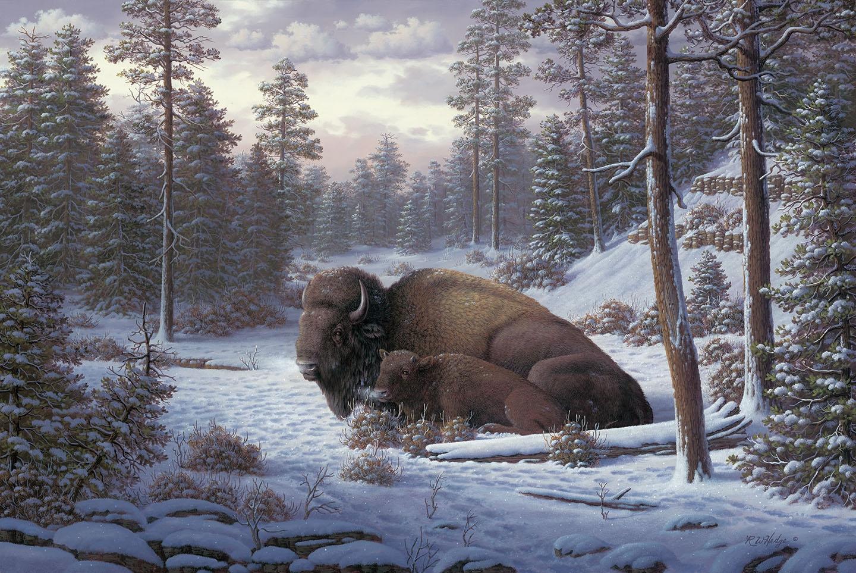 Buffalo Fine Art Prints