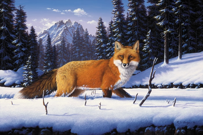 Fox Fine Art Prints