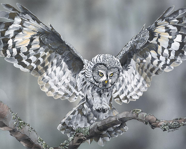 Owl Fine Art Prints