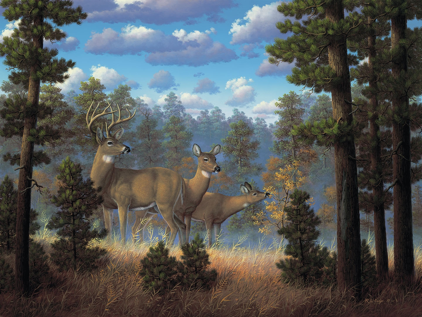 Deer Fine Art Prints