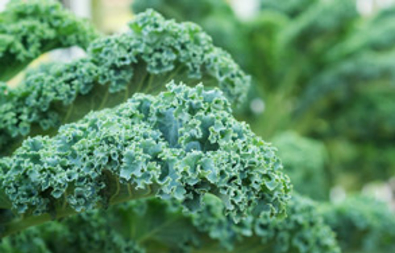 KALE - Rich in Nutrients & Pesticides!