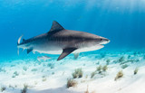 Joint Pain? Sharks May Help.