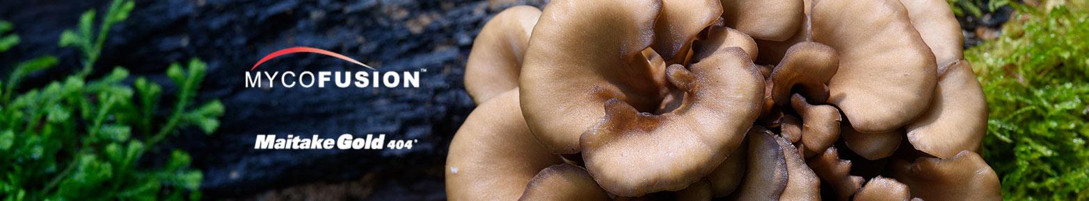 maitake-mushroom-onguard.jpg