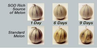 melons4-large.jpg