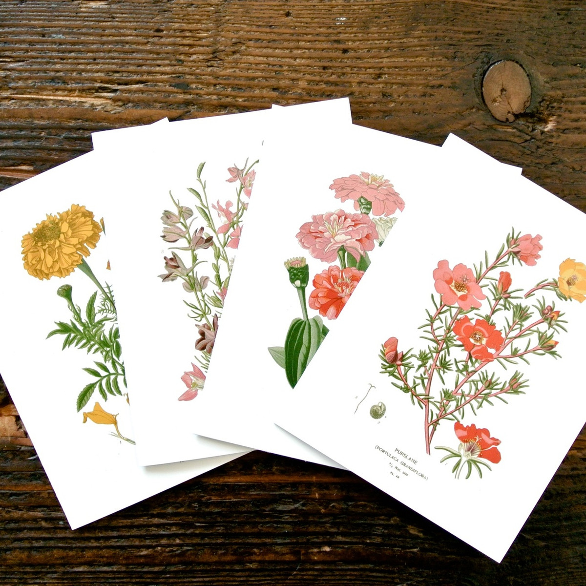 Botanical Greeting Cards Set Of 4 Seattle Seed Company