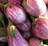 Eggplant - Rosa Bianca OG
